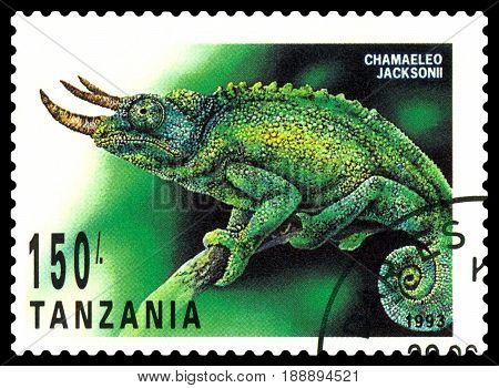 STAVROPOL RUSSIA - May 21 2017: a stamp printed by Tanzania shows Chameleon Jackson (Chamaeleo Jacksonii) series Reptile circa 1993