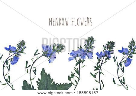 Pressed and dried flowers isolated on white blue background. For use in scrapbooking floristry or herbarium.