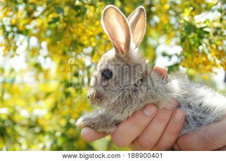 Cute little rabbit in male hands