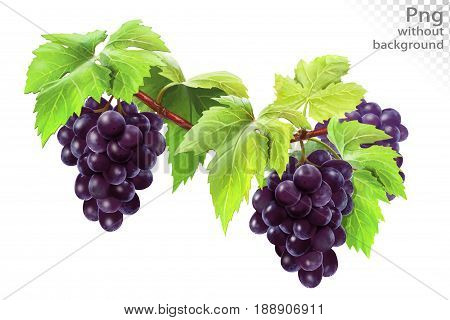 Grapes on a branch with leaves, png without background