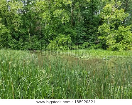 swampy wetland area with grasses and trees