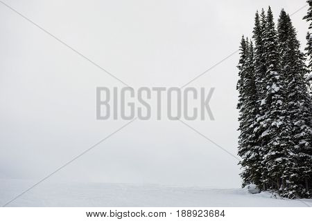 Snowy pine trees on the alp mountain slope during winter