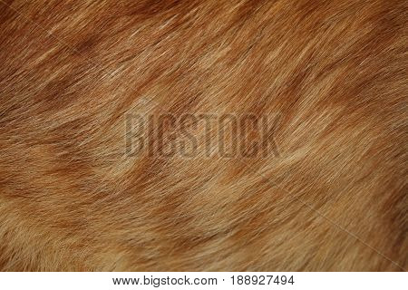 red fur , beautiful natural bright red fur, closeup