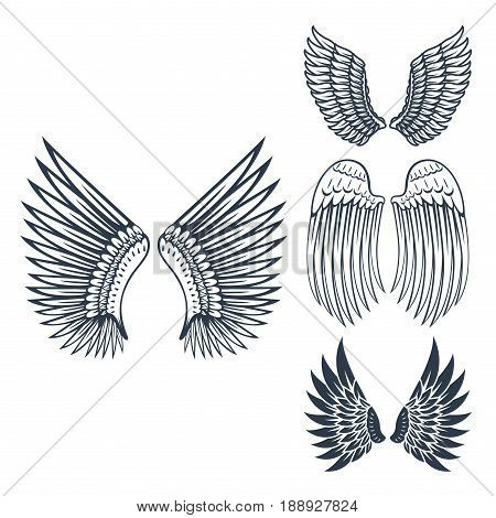 Wings isolated animal feather pinion bird freedom flight and natural hawk life peace design flying element eagle winged side shape vector illustration. Beauty haven soft anatomy graphic.
