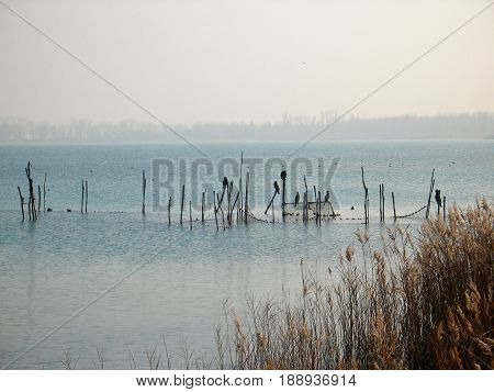 oasis on the lake with cane and birds