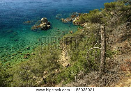Sea landscape with rocky shore beautiful clean water and old pine at the in foreground in Spain