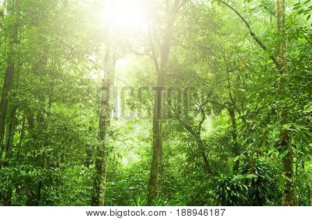 Fantastic tropical rainforest landscape with sun flare in morning.