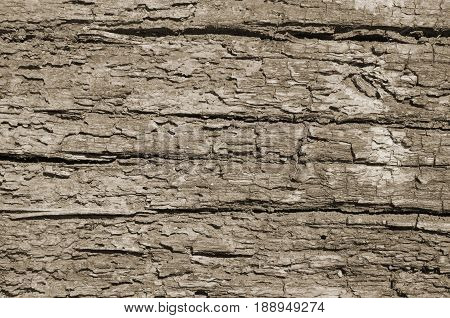 Loose texture of a rotten tree vertical background neutral color