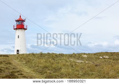 Western lighthouse in the dunes of List, Sylt. Northernmost building and oldest lighthouse in Germany. Sheep lying nearby.