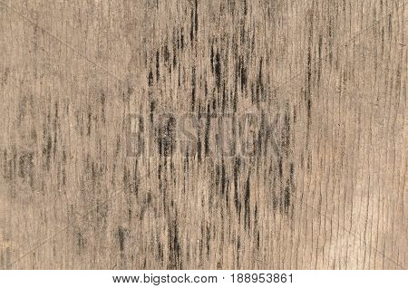 Texture of a tree with black spots a wooden panel