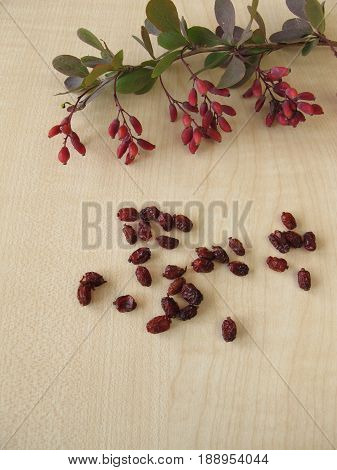 Barberry twigs with berries and leaves and dried barberries