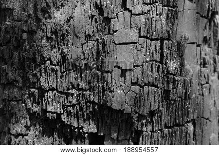 The texture of charred wood coals with deep cracks in black and white
