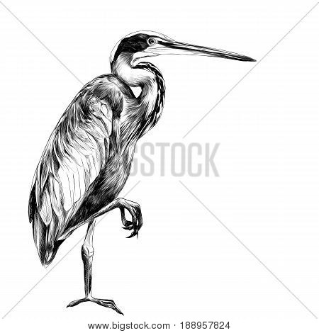 AGAMI bird stands on one leg sideways and looking into the distance sketch vector graphics black and white drawing