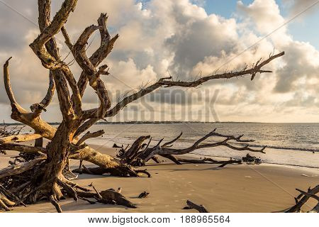 A view of a morning sunrise over the Atlantic Ocean at Driftwood Beach on Jekyll Island Georgia.