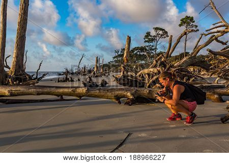 A photographer takes pictures at sunrise at Driftwood Beach on Jekyll Island Georgia.