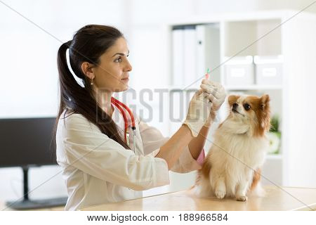 young veterinarian doctor giving vaccination injection to pet dog