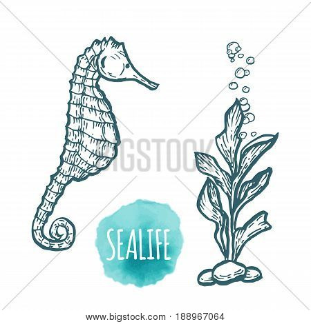 sea Horse drawing on white background. Hand drawn outline seafood illustration.