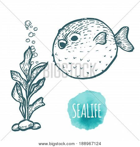 Fugu fish drawing on white background. Hand drawn outline seafood illustration.