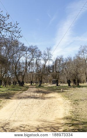 Dirt road through a forest with leafless trees in winter