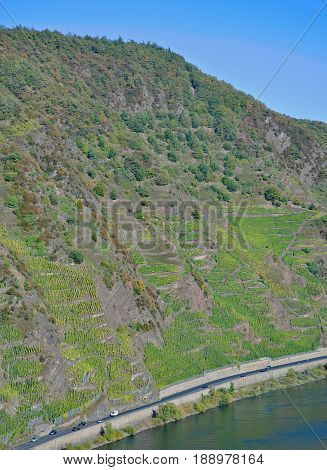 steepest Vineyard in Europe called Calmont near Bremm at Mosel River,Rhineland-Palatinate,Germany