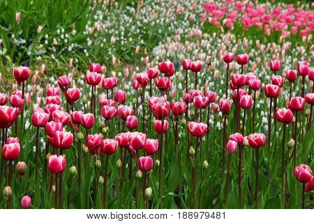 The most significant thing in nature is the life of a flower. Impressive picture with flowers. Fantastic coloring.