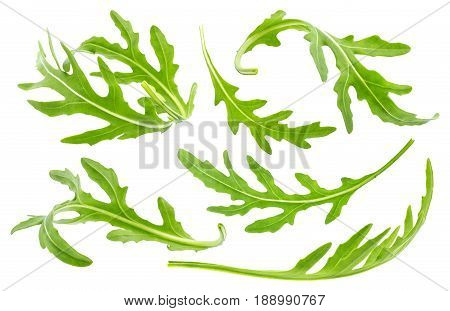 Ruccola leaf isolated on white background, single green arugula leave collection