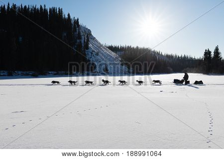 Dog team pulling sled with musher contender in Yukon Quest 1000 Mile International Sled Dog Race in beautiful Yukon Territory Canada winter snow landscape