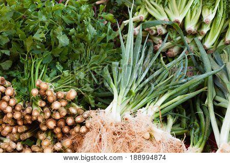 Green Onions Fresh Parsley Harvest