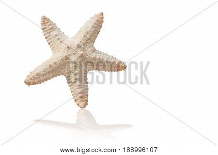 Sea shells isolated on white background with clipping path.Sea shells popular decorations for the event.