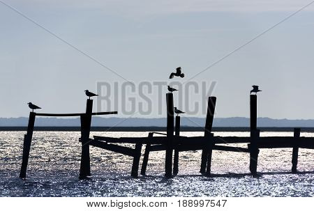 Silhouette of Seagulls on Old Pier with Reflecting Water