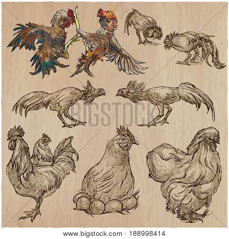 Farm animals - POULTRY roosters and hen. Collection of an hand drawn vector illustrations. Freehand sketches. Line art. Each drawing comprise of a few layers of outlines. Colored background is isolated.