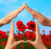 Female hands showing home sign over red summer poppy field conceptual isolated with clipping path poster