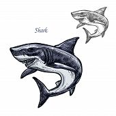 Shark sketch vector fish icon. Isolated ocean predatory white shark fish species. Isolated fauna and zoology symbol or emblem for fishing club or fishery market poster