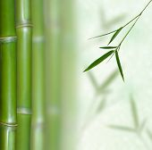 Beautiful Bamboo Border. Bamboo a natural background poster
