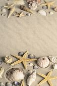 shellfish on sandy beach. Seastar or starfish with clamms and other shellfish on a sand background poster