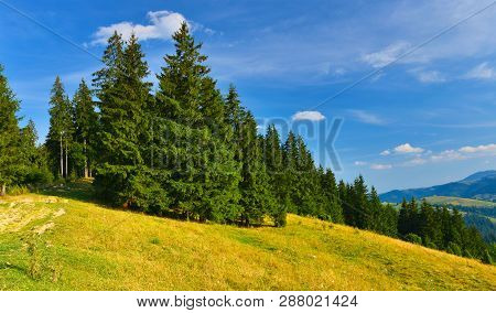 Summer Forest. View Of Conifer Forest In Summer Mountains
