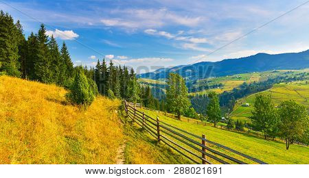 Countryside. Panoramic View Of Summer Countryside With Conifer Forest