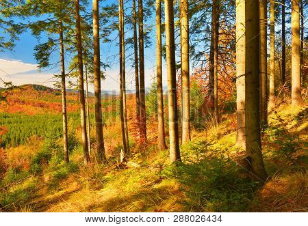 Forest. Autumn Woodland And Border Of Conifer Forest