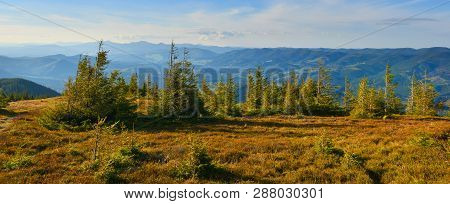 Panoramic Landscape With Mountain Conifer Forest In Spring