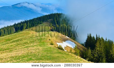 Landscape With Mountain Conifer Forest In Spring