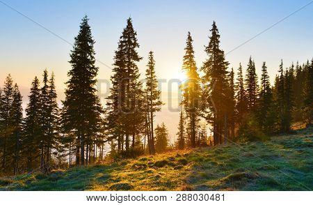 Sunrise Forest. Mountain Conifer Forest With Rising Sun