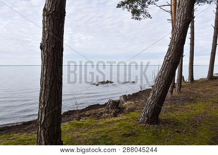 Coastal View With Tree Trunks By Calm Water At The Coast Of The Swedish Island Oland In The Baltic S
