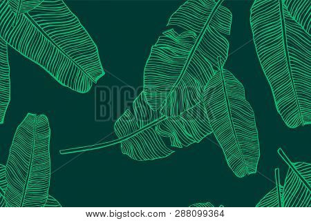 Tropical Leaves Pattern. Seamless Texture With Banana Leaf. Hand Drawn Tropic Foliage. Exotic Green