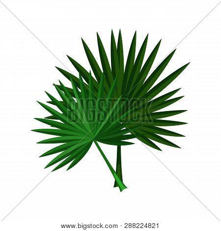 Palm Leaves Illustration. Green, Leaf, Natural. Nature, Flora, Summer. Nature Plants Concept. Vector