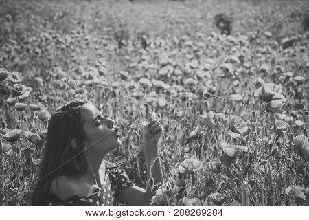 Opium Poppy, Youth, Freshness, Ecology, Woman. Summer, Spring, Poppy Flower. Drug, Opium, Narcotics,