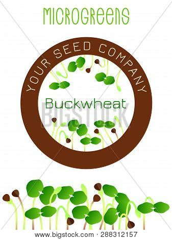 Microgreens Buckwheat. Seed Packaging Design, Round Element In The Center. Sprouting Seeds Of A Plan