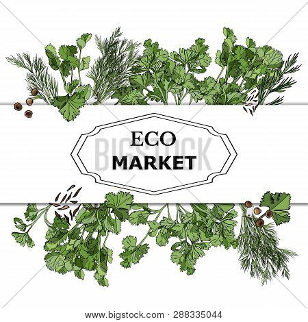 Frame Of Color  Hand Drawn Sketch Of  Different Green Herbs And Spices. Temlate For Design Banner, M