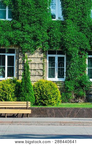 The Urban Invironment- Wooden Bench In Front Of The Brick Facade Of An Old Building Covered With Ivy