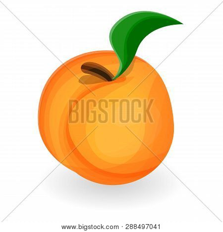 Natural Peach Icon. Cartoon Of Natural Peach Icon For Web Design Isolated On White Background