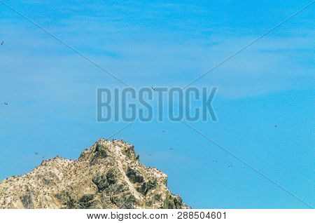 The Shag Rocks Are Six Small, Uninhabited, Islands On The Most Western Part Of South Georgia. They A